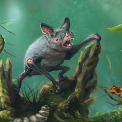 Mystacina robusta (Gavin Mouldey)